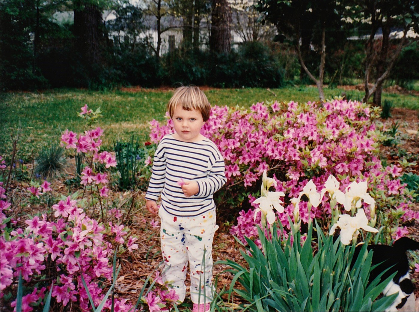 A young girl in a striped shirt standing among vivid pink azalea blooms with a cat just barely visible at her feet.